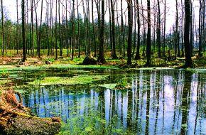 Kliknij, aby powiększyć opis: Zalew na rzece Brzyniczka rozmiar: 1,90 KB pobrań: 11451 data: 2005-06-17 14:06:02