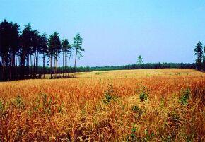 Kliknij, aby powiększyć opis: Zespół Przyrodniczo - Krajobrazowy Mostki rozmiar: 1,40 KB pobrań: 11079 data: 2005-06-17 14:50:10