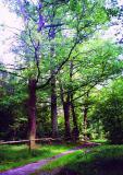 Galeria Przyroda