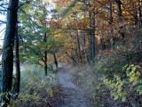 Galeria Ryszard Niedoba - Jesień 2005